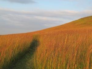 RED GRASS AT MOUNT MITCHELLa